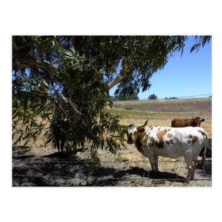 Postal: Dirija debajo de árbol en Paso Robles, CA