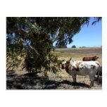Postal: Dirija debajo de árbol en Paso Robles, CA Tarjetas Postales