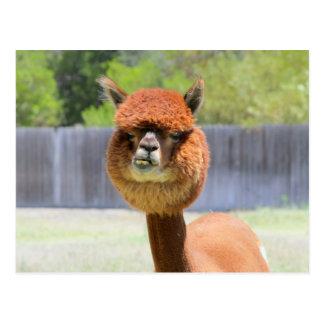 Postal divertida de la alpaca