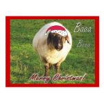 Postal divertida del navidad de las ovejas