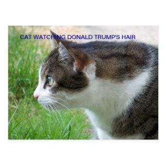 Postal divertida: Gato que mira el pelo de Donald