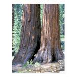 Postal doble de la fotografía de los árboles de la