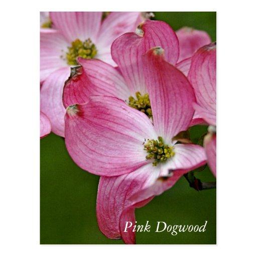 Postal:  Dogwood vertical