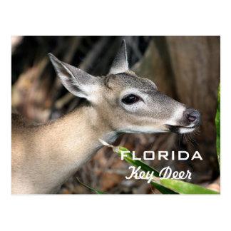Postal dominante de los ciervos de la Florida