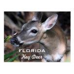 Postal dominante de los ciervos de la Florida, ver
