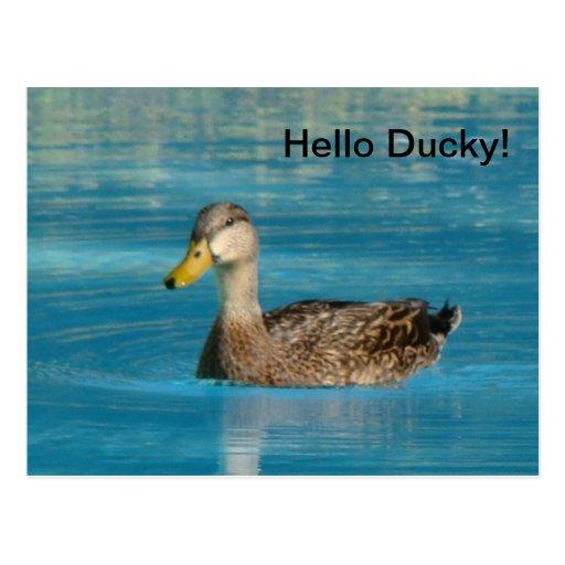 Postal Ducky