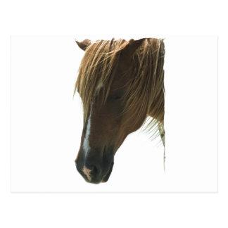 Postal dulce del caballo del mustango