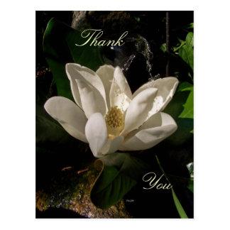Postal dulce del flor de la magnolia