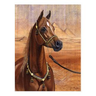 Postal egipcia del caballo de princesa Arabian