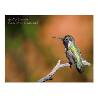 Postal: El colibrí #5 de la costa Tarjeta Postal