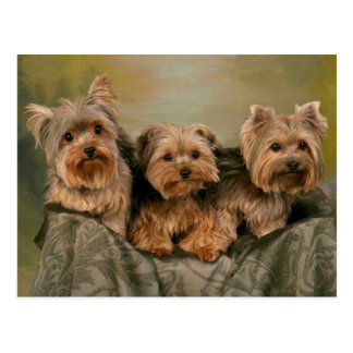 Postal en blanco de los perros de perrito de Yorks
