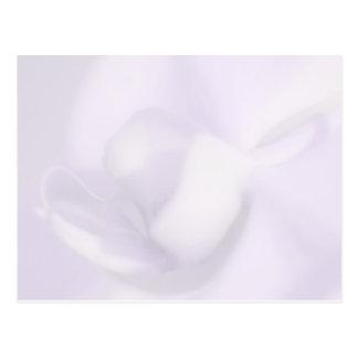 Postal en blanco, orquídea suave hermosa