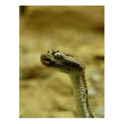 Postal Enano-Descolorada de la serpiente de cascab