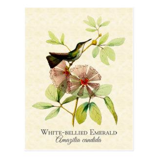 Postal esmeralda hinchada blanco del arte del