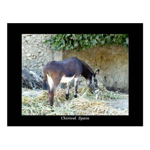 Postal española del burro