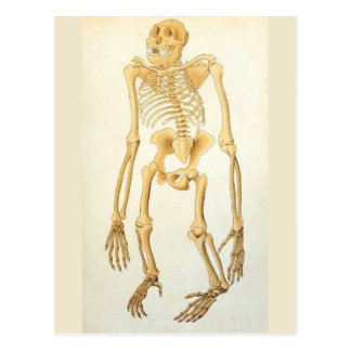 Postal esquelética anatómica del mono