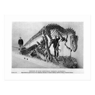 Postal esquelética del arte del Allosaurus
