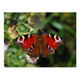 Postal europea de la mariposa de la oruga del pavo