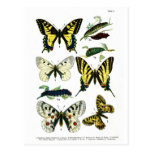 Postal europea de la placa de mariposas I