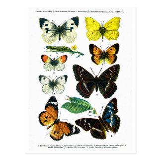 Postal europea de la placa de mariposas II