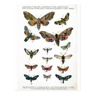 Postal europea de las mariposas