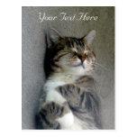 Postal feliz adaptable del gato