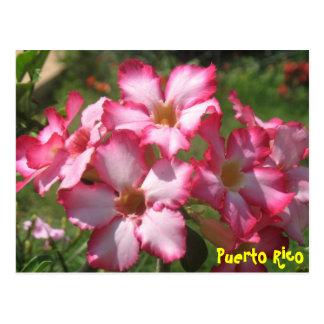 Postal floral 2