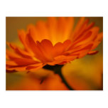 Postal floral anaranjada