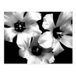 Postal floral blanco y negro