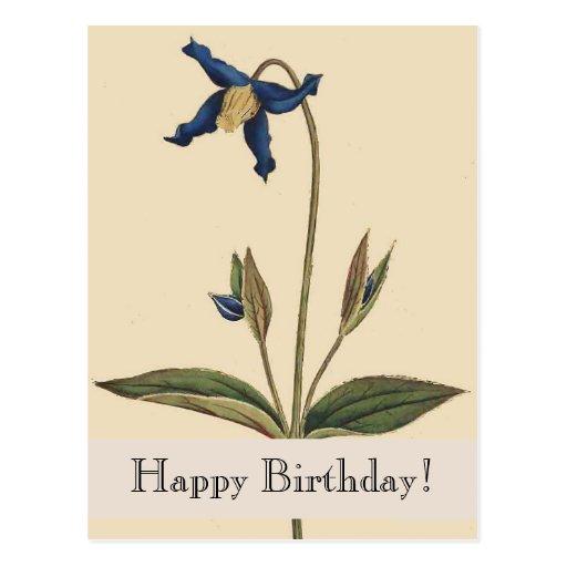 Postal floral botánica del cumpleaños del vintage