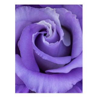 Postal floral color de rosa púrpura