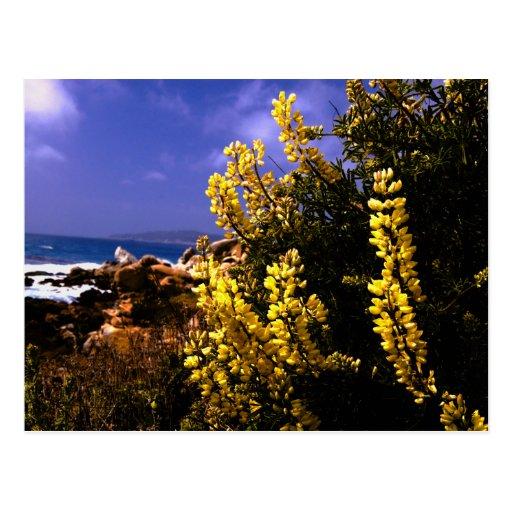 Postal floral de la costa de California
