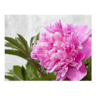 Postal floral de la flor rosada hermosa del peony