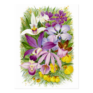 Postal floral de las orquídeas de la antigüedad/de