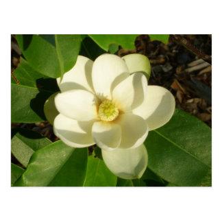 Postal floral del arte de la foto de la magnolia