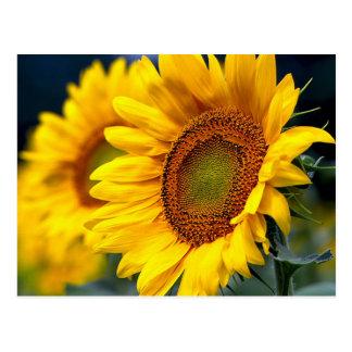 Postal floral del espacio en blanco amarillo del