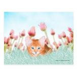 Postal floral del gatito