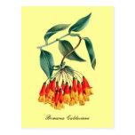 Postal floral del vintage