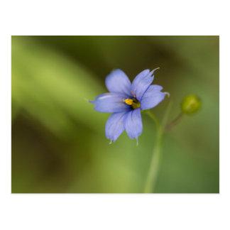 Postal floral observada azul del Wildflower de la