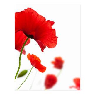 Postal - flores de amapolas