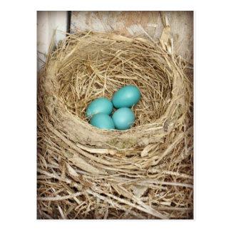 Postal fotográfica del huevo azul del petirrojo