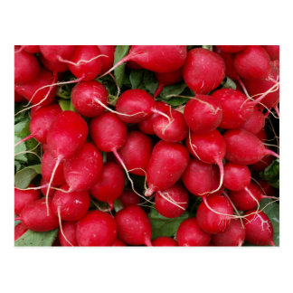 Postal fresca de los rábanos rojos