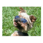 Postal fresca de Yorkshire Terrier