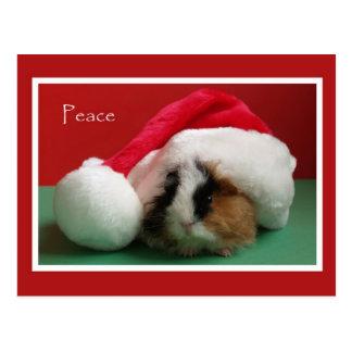 Postal fresca del conejillo de Indias del navidad