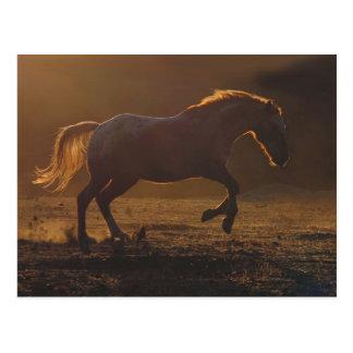 Postal galopante del caballo con la iluminación tr