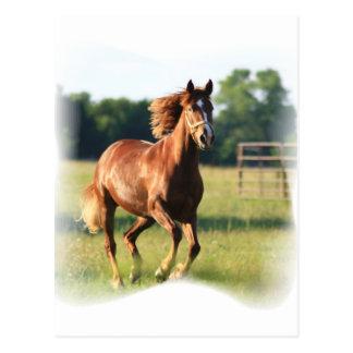 Postal galopante del caballo de la castaña