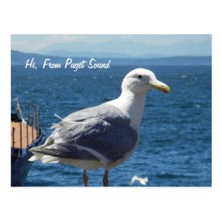 Postal:  Gaviota #1 Tarjeta Postal
