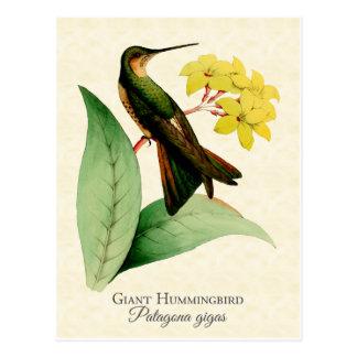 Postal gigante del colibrí