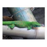 Postal gigante del Gecko del día de Madagascar