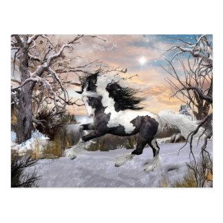 Postal gitana del caballo de Vanner